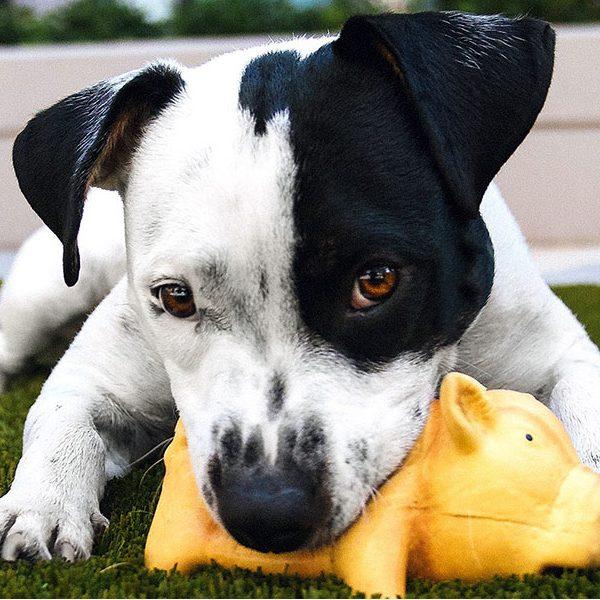 sun-dog-cat-moon-veterinary-clinic-charleston-johns-island